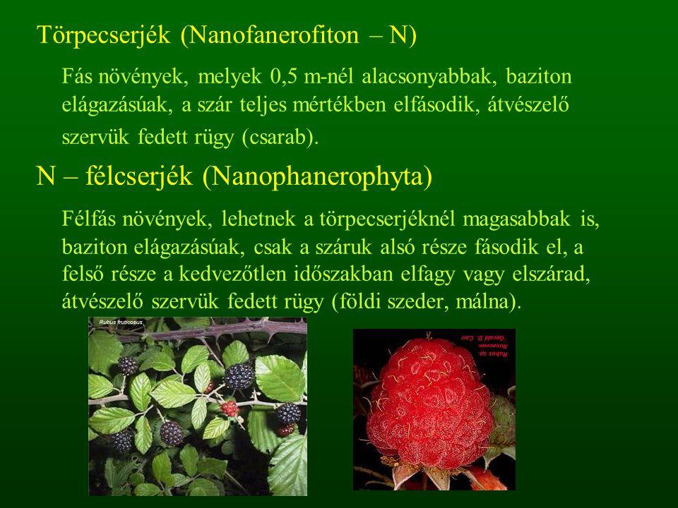 Törpecserjék (Nanofanerofiton – N) Fás növények, melyek 0,5 m-nél alacsonyabbak, baziton elágazásúak, a szár teljes mértékben elfásodik, átvészelő sze