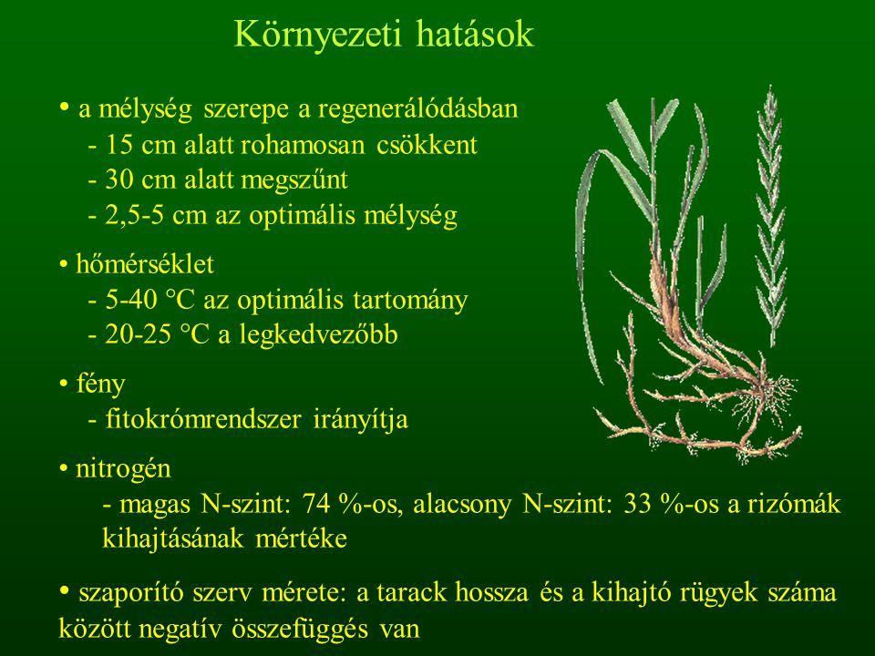 Környezeti hatások a mélység szerepe a regenerálódásban - 15 cm alatt rohamosan csökkent - 30 cm alatt megszűnt - 2,5-5 cm az optimális mélység hőmérs