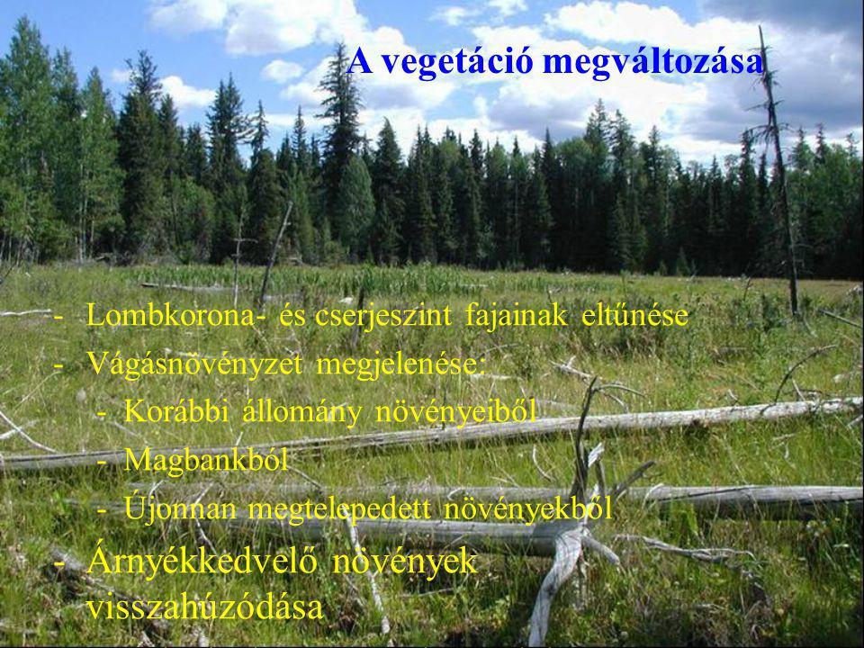 -Lombkorona- és cserjeszint fajainak eltűnése -Vágásnövényzet megjelenése: -Korábbi állomány növényeiből -Magbankból -Újonnan megtelepedett növényekből -Árnyékkedvelő növények visszahúzódása -Fénykedvelő növények megjelenése A vegetáció megváltozása