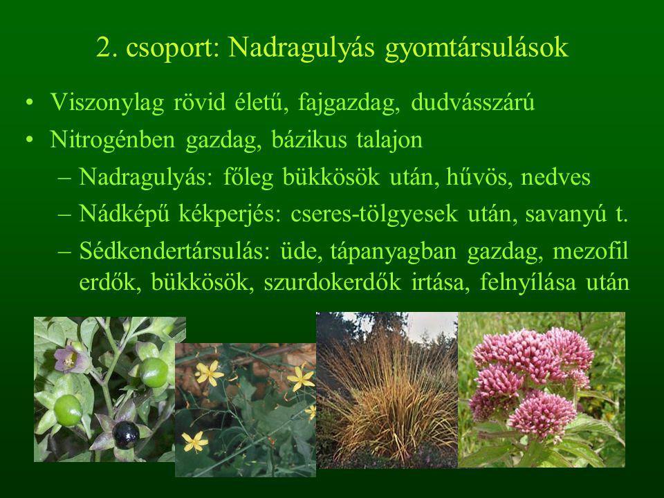2. csoport: Nadragulyás gyomtársulások Viszonylag rövid életű, fajgazdag, dudvásszárú Nitrogénben gazdag, bázikus talajon –Nadragulyás: főleg bükkösök
