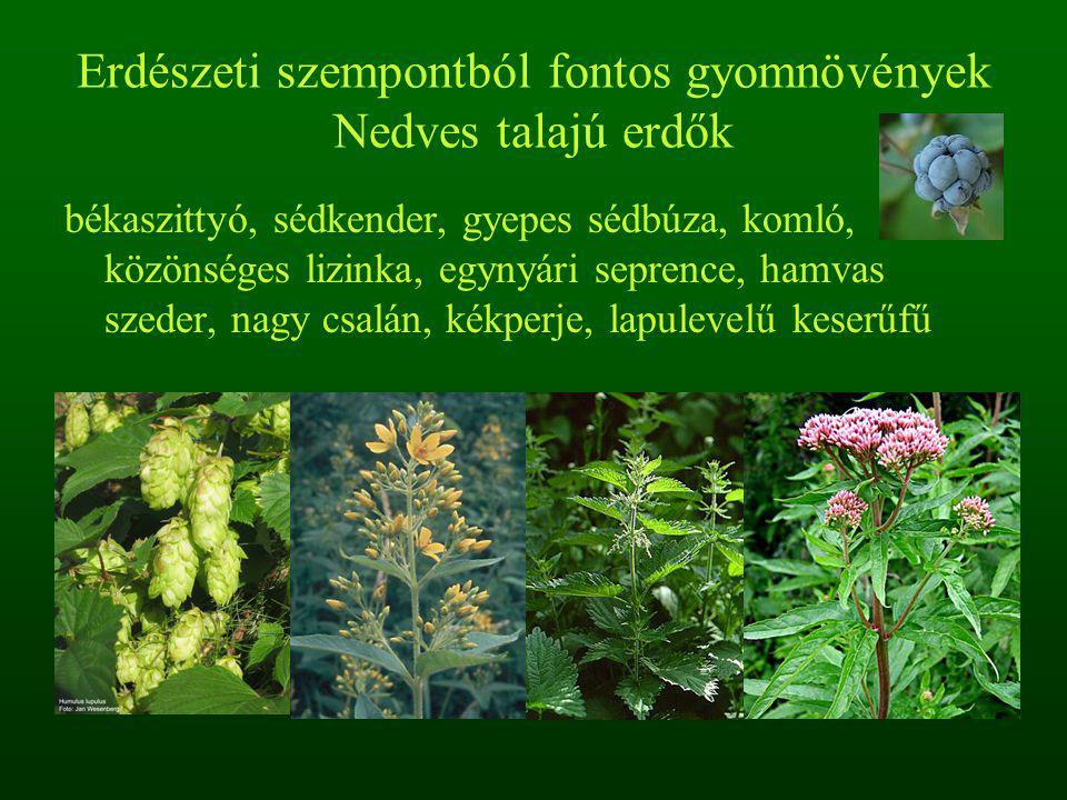 Erdészeti szempontból fontos gyomnövények Nedves talajú erdők békaszittyó, sédkender, gyepes sédbúza, komló, közönséges lizinka, egynyári seprence, hamvas szeder, nagy csalán, kékperje, lapulevelű keserűfű