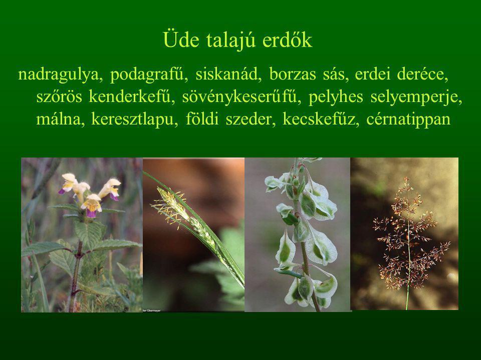 Üde talajú erdők nadragulya, podagrafű, siskanád, borzas sás, erdei deréce, szőrös kenderkefű, sövénykeserűfű, pelyhes selyemperje, málna, keresztlapu, földi szeder, kecskefűz, cérnatippan