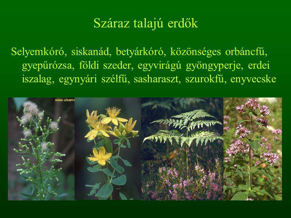 Száraz talajú erdők Selyemkóró, siskanád, betyárkóró, közönséges orbáncfű, gyepűrózsa, földi szeder, egyvirágú gyöngyperje, erdei iszalag, egynyári szélfű, sasharaszt, szurokfű, enyvecske