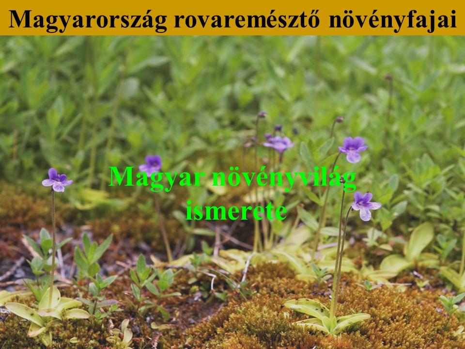 Magyar növényvilág ismerete Magyarország rovaremésztő növényfajai