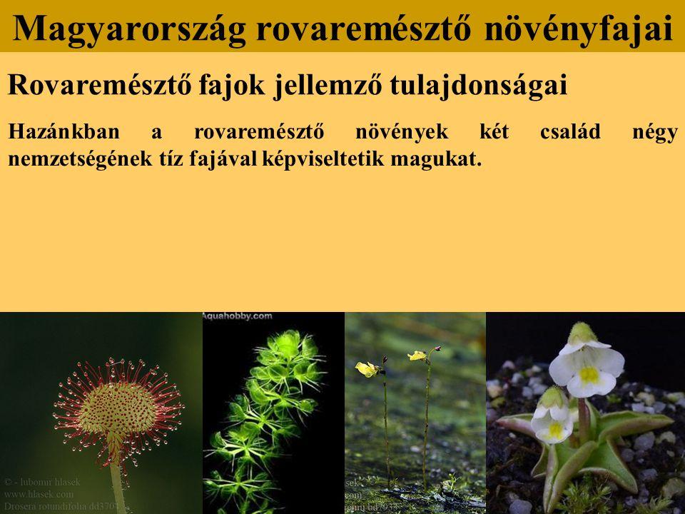 Rovaremésztő fajok jellemző tulajdonságai Hazánkban a rovaremésztő növények két család négy nemzetségének tíz fajával képviseltetik magukat. Magyarors