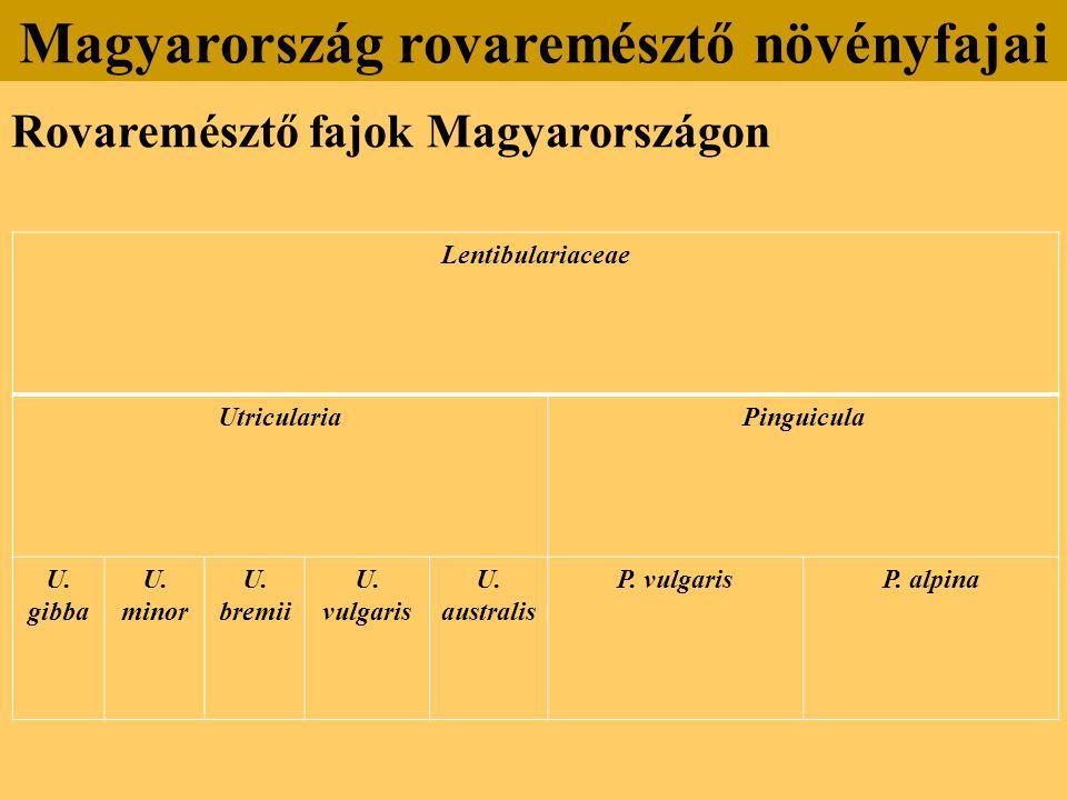 Rovaremésztő fajok Magyarországon Magyarország rovaremésztő növényfajai Lentibulariaceae UtriculariaPinguicula U. gibba U. minor U. bremii U. vulgaris