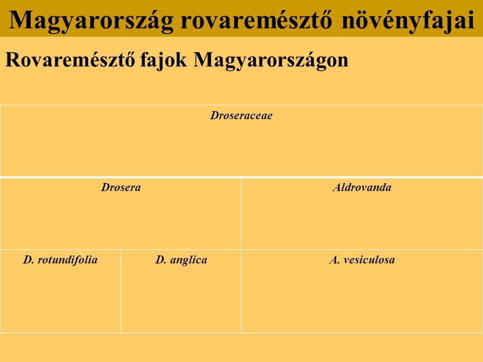 Rovaremésztő fajok Magyarországon Magyarország rovaremésztő növényfajai Droseraceae DroseraAldrovanda D. rotundifoliaD. anglicaA. vesiculosa