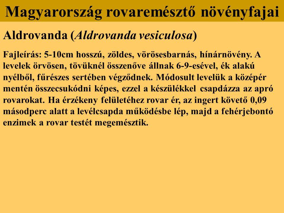 Aldrovanda (Aldrovanda vesiculosa) Fajleírás: 5-10cm hosszú, zöldes, vörösesbarnás, hínárnövény. A levelek örvösen, tövüknél összenőve állnak 6-9-esév