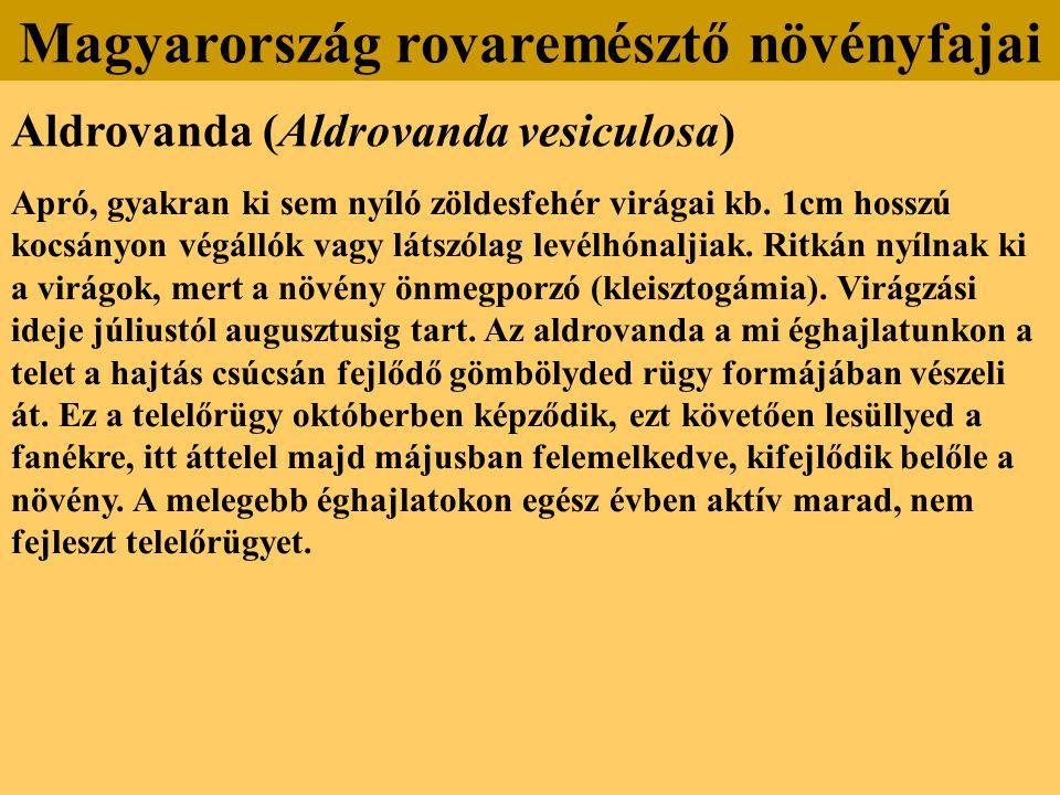 Aldrovanda (Aldrovanda vesiculosa) Apró, gyakran ki sem nyíló zöldesfehér virágai kb. 1cm hosszú kocsányon végállók vagy látszólag levélhónaljiak. Rit