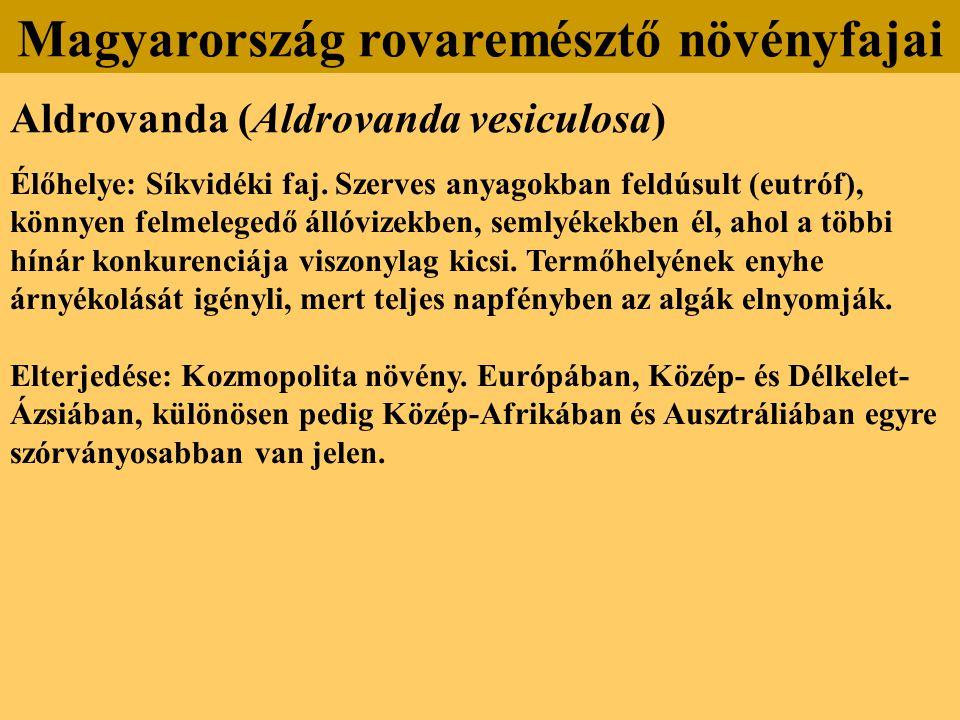 Aldrovanda (Aldrovanda vesiculosa) Élőhelye: Síkvidéki faj. Szerves anyagokban feldúsult (eutróf), könnyen felmelegedő állóvizekben, semlyékekben él,