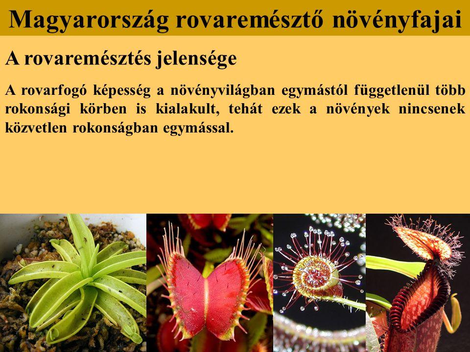 A rovaremésztés jelensége A rovarfogó képesség a növényvilágban egymástól függetlenül több rokonsági körben is kialakult, tehát ezek a növények nincse