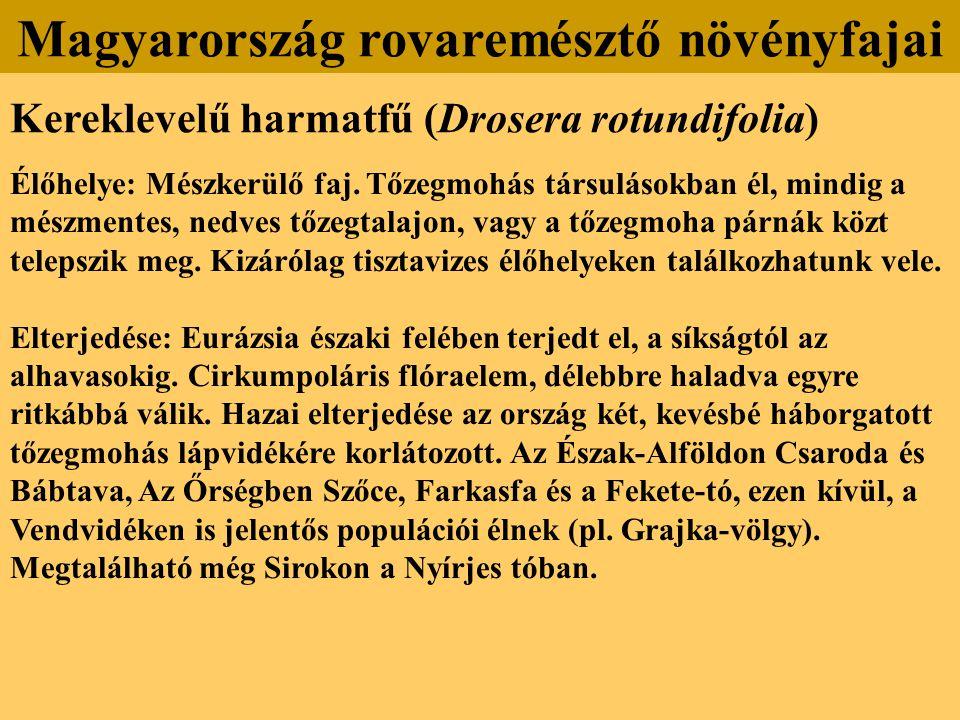 Kereklevelű harmatfű (Drosera rotundifolia) Élőhelye: Mészkerülő faj. Tőzegmohás társulásokban él, mindig a mészmentes, nedves tőzegtalajon, vagy a tő