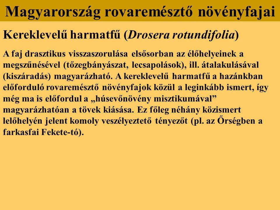 Kereklevelű harmatfű (Drosera rotundifolia) A faj drasztikus visszaszorulása elsősorban az élőhelyeinek a megszűnésével (tőzegbányászat, lecsapolások)