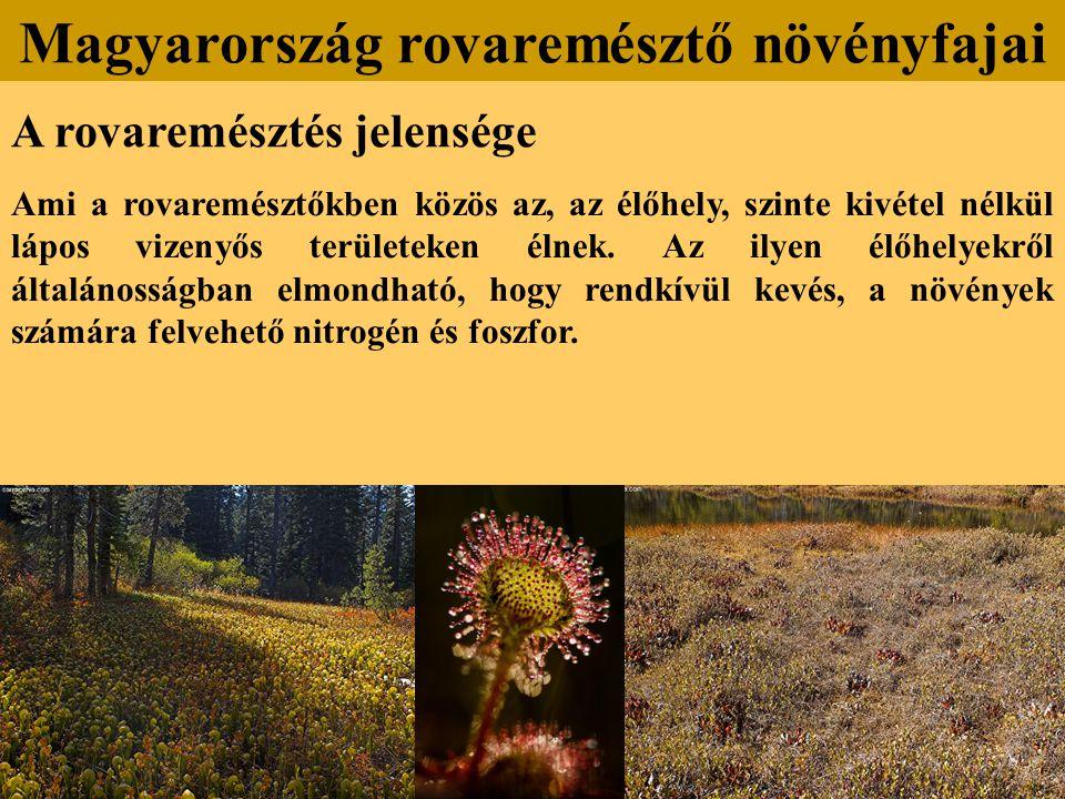 A rovaremésztés jelensége Ami a rovaremésztőkben közös az, az élőhely, szinte kivétel nélkül lápos vizenyős területeken élnek. Az ilyen élőhelyekről á