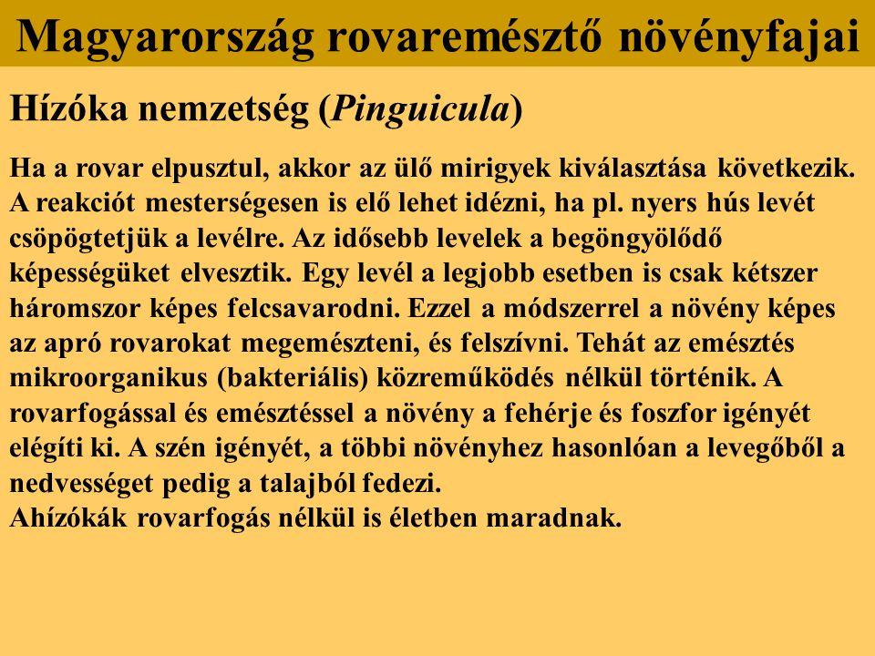 Hízóka nemzetség (Pinguicula) Ha a rovar elpusztul, akkor az ülő mirigyek kiválasztása következik. A reakciót mesterségesen is elő lehet idézni, ha pl