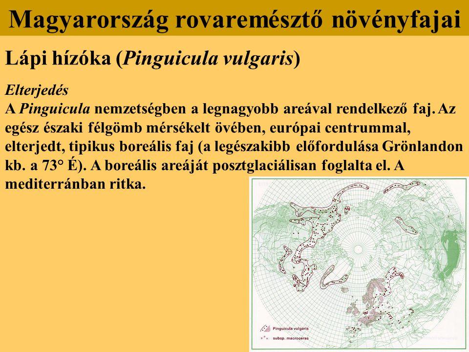 Lápi hízóka (Pinguicula vulgaris) Elterjedés A Pinguicula nemzetségben a legnagyobb areával rendelkező faj. Az egész északi félgömb mérsékelt övében,