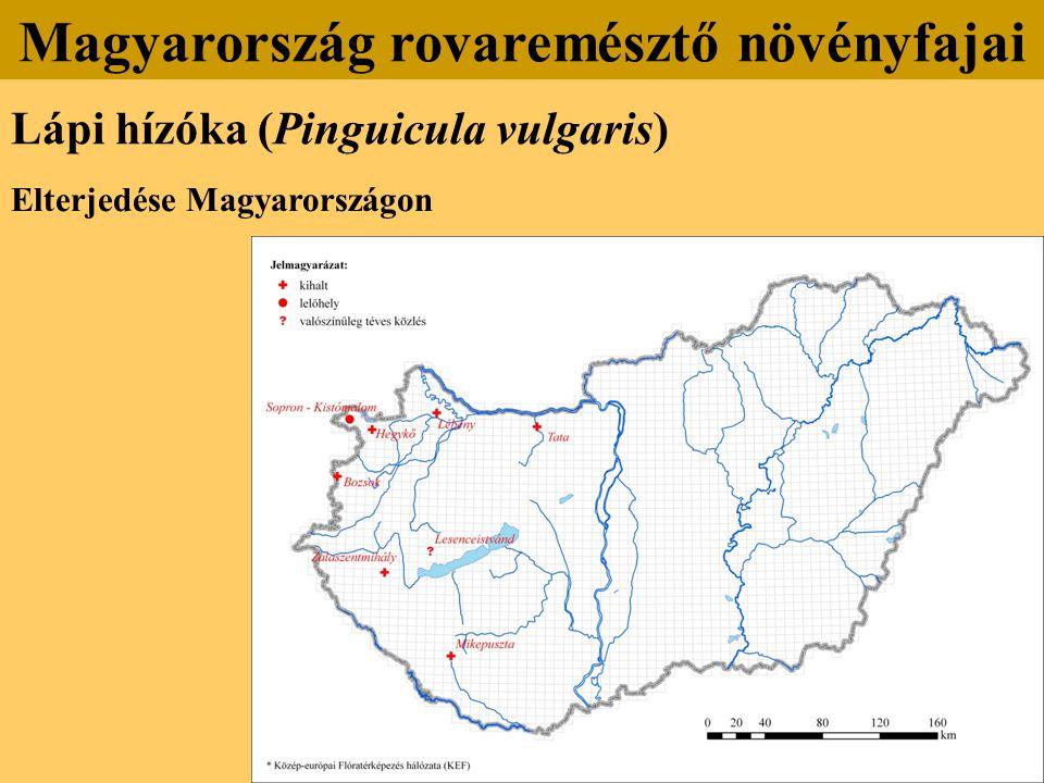 Lápi hízóka (Pinguicula vulgaris) Elterjedése Magyarországon Magyarország rovaremésztő növényfajai