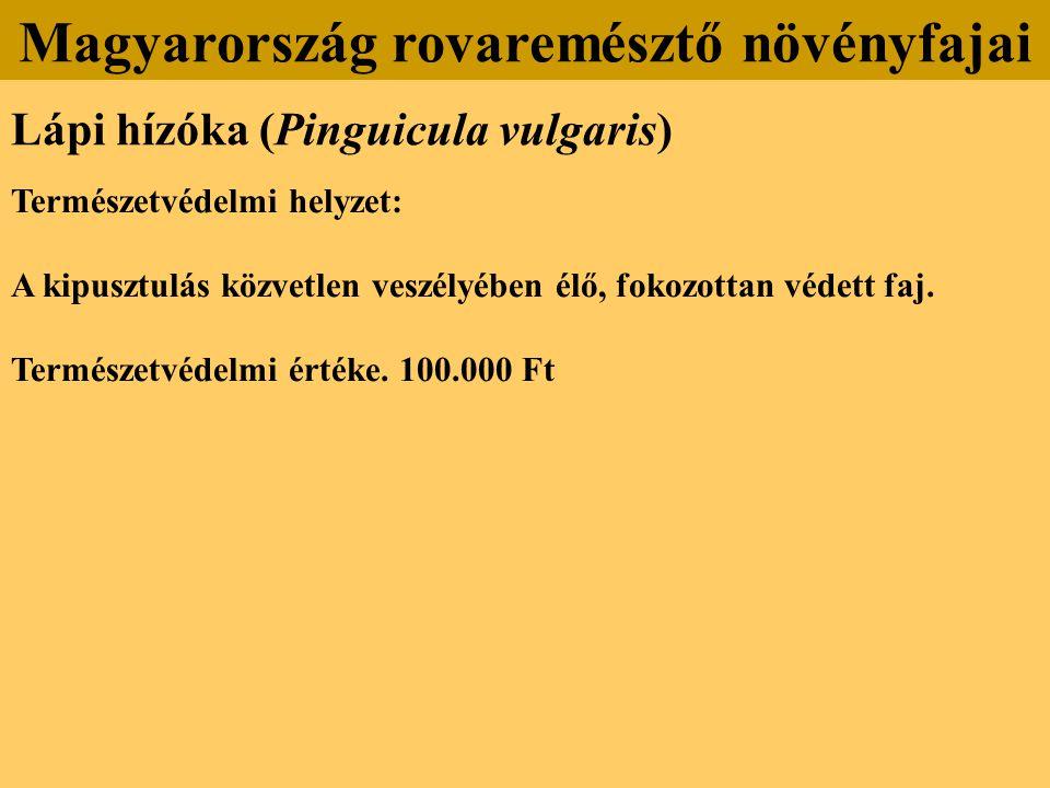 Lápi hízóka (Pinguicula vulgaris) Természetvédelmi helyzet: A kipusztulás közvetlen veszélyében élő, fokozottan védett faj. Természetvédelmi értéke. 1