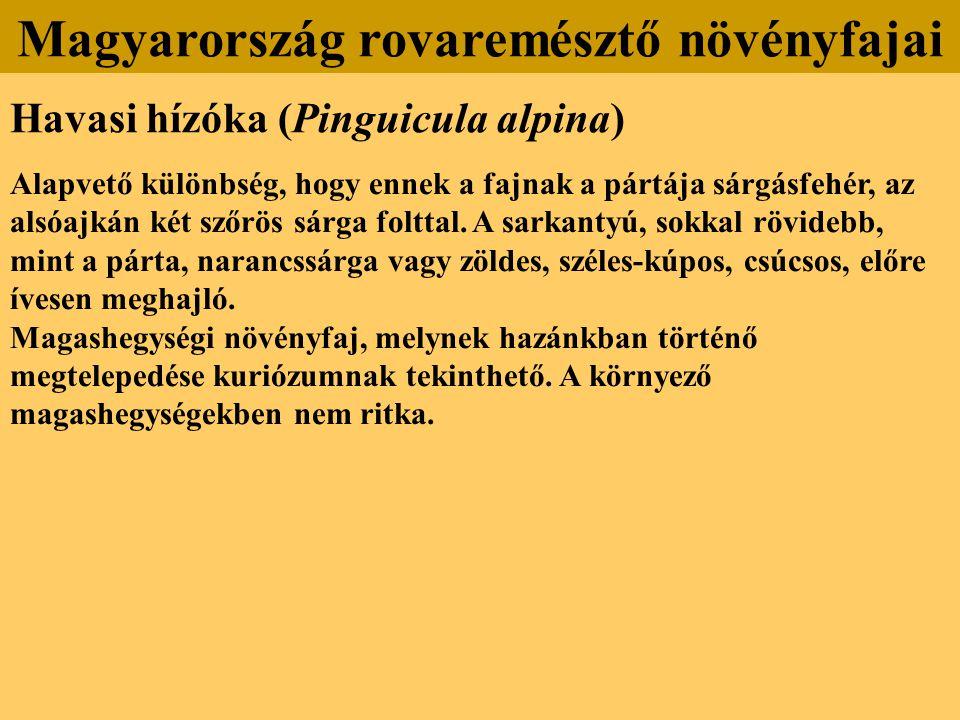 Havasi hízóka (Pinguicula alpina) Alapvető különbség, hogy ennek a fajnak a pártája sárgásfehér, az alsóajkán két szőrös sárga folttal. A sarkantyú, s