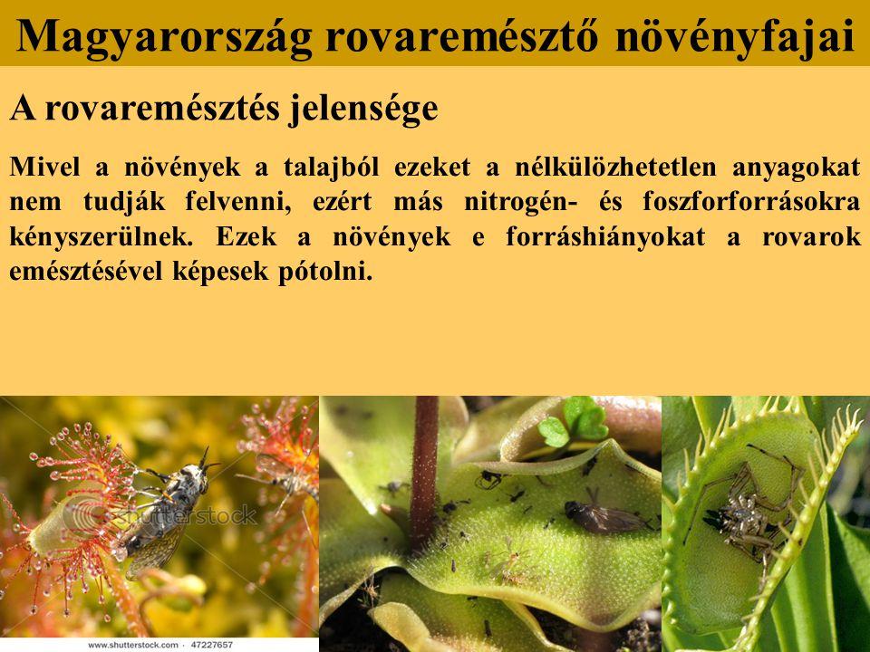 A rovaremésztés jelensége Mivel a növények a talajból ezeket a nélkülözhetetlen anyagokat nem tudják felvenni, ezért más nitrogén- és foszforforrásokr