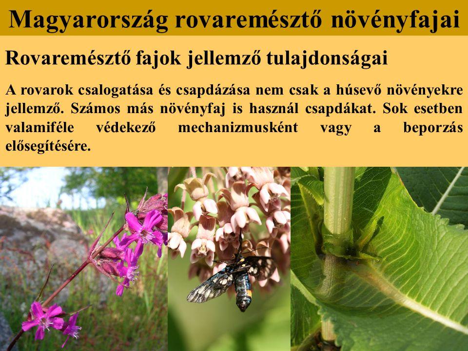 Rovaremésztő fajok jellemző tulajdonságai A rovarok csalogatása és csapdázása nem csak a húsevő növényekre jellemző. Számos más növényfaj is használ c