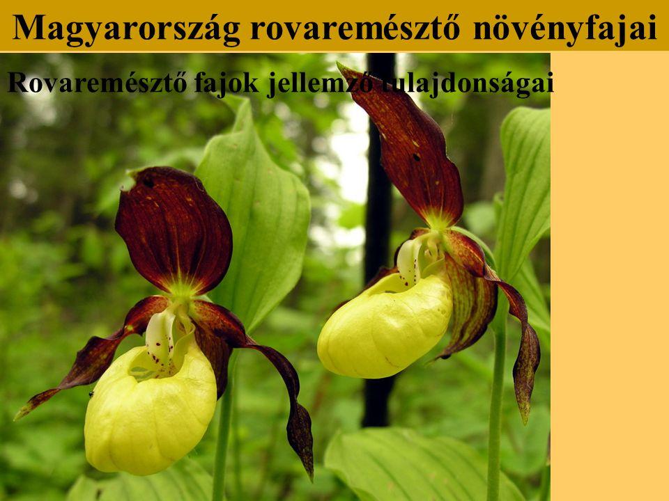 Rovaremésztő fajok jellemző tulajdonságai Magyarország rovaremésztő növényfajai