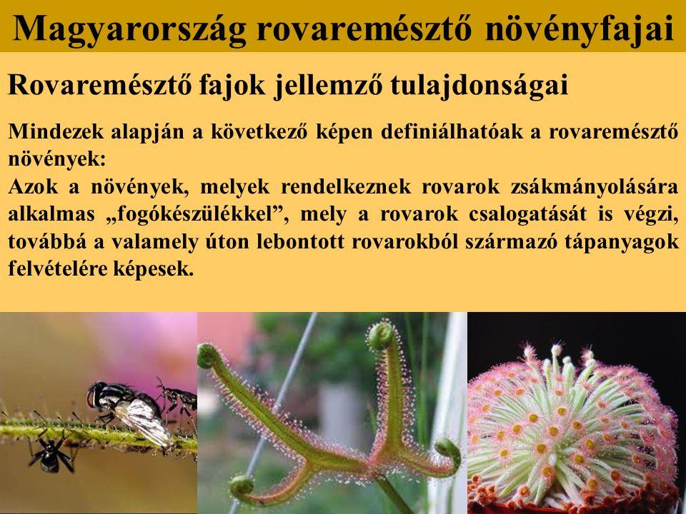 Rovaremésztő fajok jellemző tulajdonságai Mindezek alapján a következő képen definiálhatóak a rovaremésztő növények: Azok a növények, melyek rendelkez
