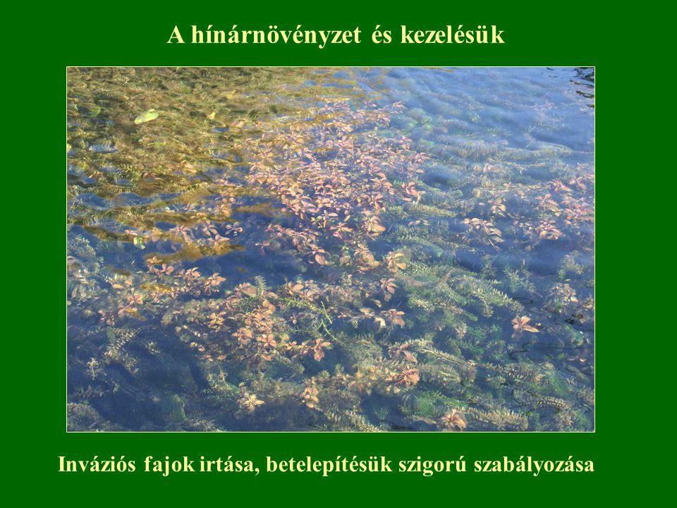 Inváziós fajok irtása, betelepítésük szigorú szabályozása A hínárnövényzet és kezelésük