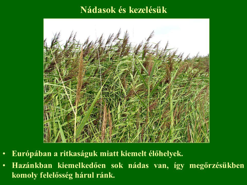 Nádasok és kezelésük Európában a ritkaságuk miatt kiemelt élőhelyek. Hazánkban kiemelkedően sok nádas van, így megőrzésükben komoly felelősség hárul r