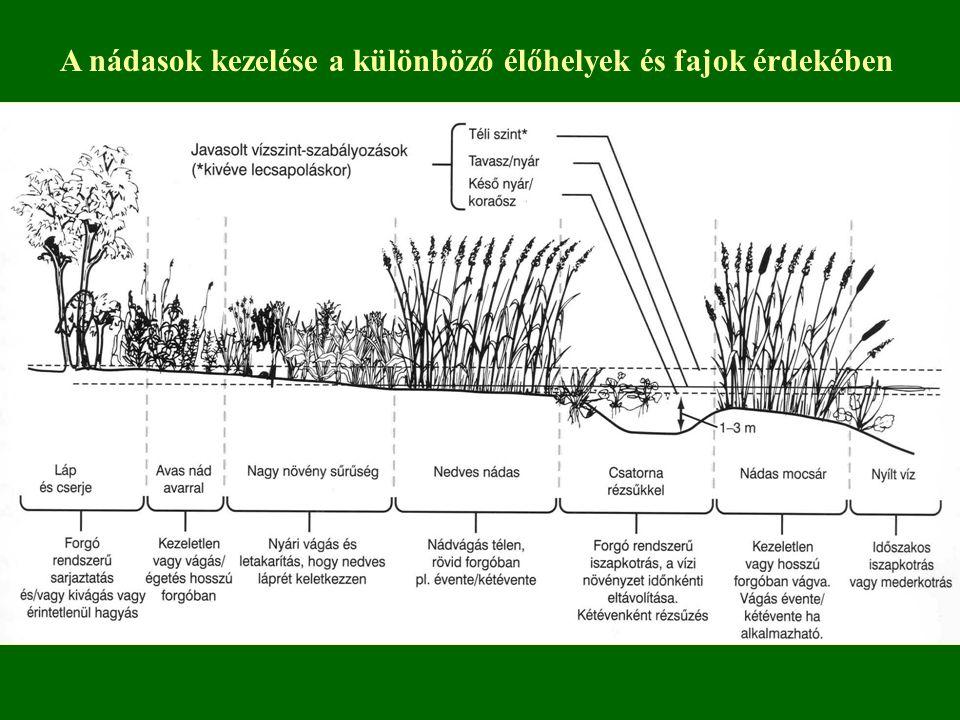 A nádasok kezelése a különböző élőhelyek és fajok érdekében