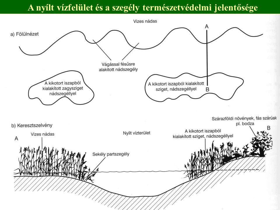 A nyílt vízfelület és a szegély természetvédelmi jelentősége
