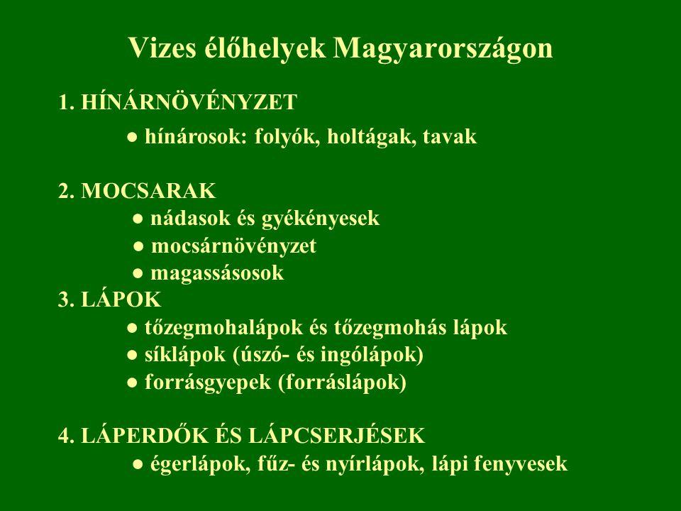Vizes élőhelyek Magyarországon 1. HÍNÁRNÖVÉNYZET ● hínárosok: folyók, holtágak, tavak 2. MOCSARAK ● nádasok és gyékényesek ● mocsárnövényzet ● magassá