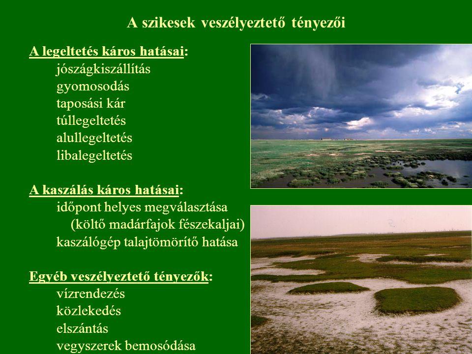 A szikesek veszélyeztető tényezői A legeltetés káros hatásai: jószágkiszállítás gyomosodás taposási kár túllegeltetés alullegeltetés libalegeltetés A