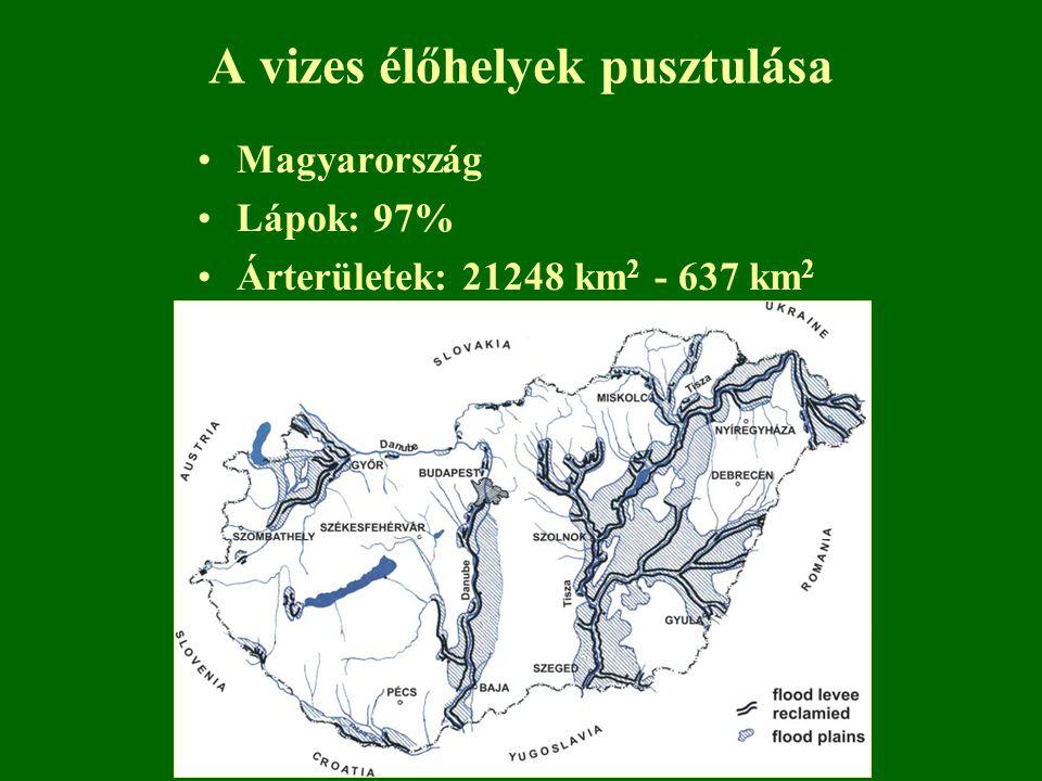 A vizes élőhelyek pusztulása Magyarország Lápok: 97% Árterületek: 21248 km 2 - 637 km 2