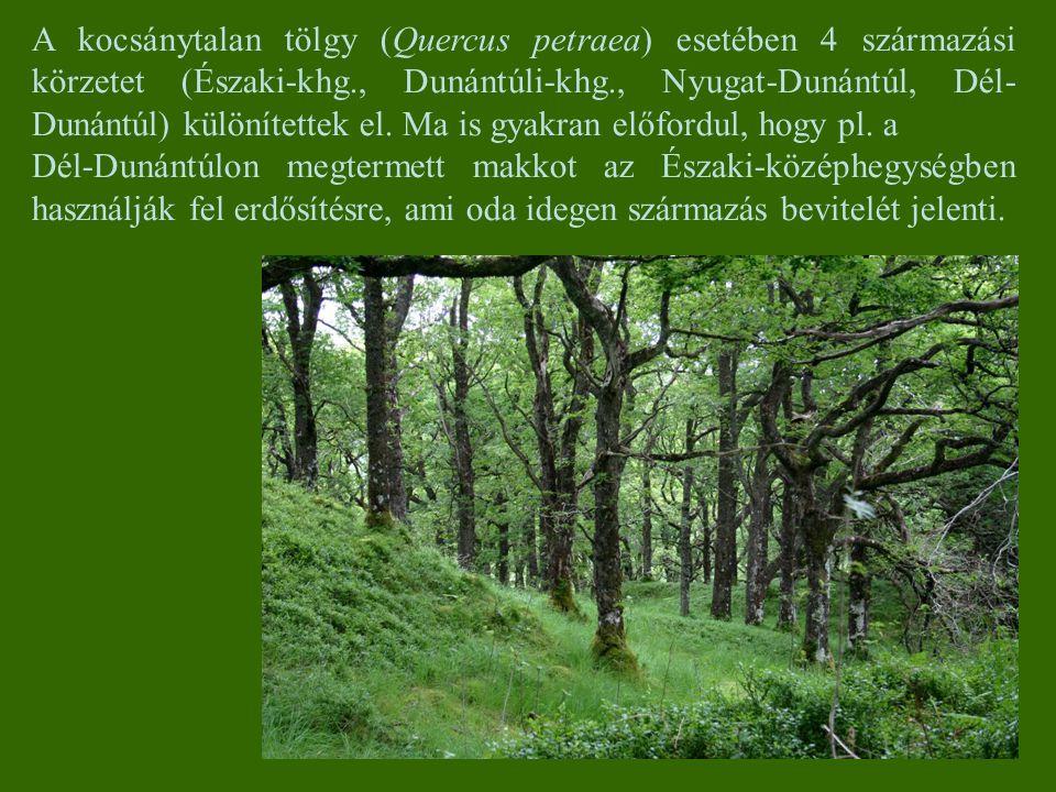 A kocsánytalan tölgy (Quercus petraea) esetében 4 származási körzetet (Északi-khg., Dunántúli-khg., Nyugat-Dunántúl, Dél- Dunántúl) különítettek el. M