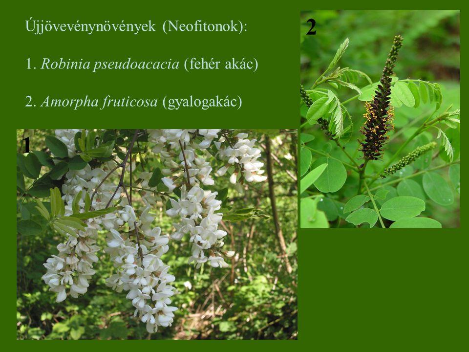 Újjövevénynövények (Neofitonok): 1. Robinia pseudoacacia (fehér akác) 2. Amorpha fruticosa (gyalogakác) 1 2