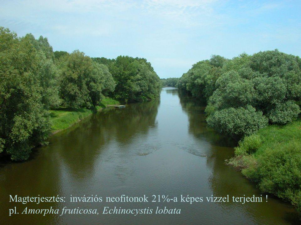Magterjesztés: inváziós neofitonok 21%-a képes vízzel terjedni ! pl. Amorpha fruticosa, Echinocystis lobata
