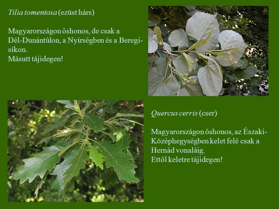 Tilia tomentosa (ezüst hárs) Magyarországon őshonos, de csak a Dél-Dunántúlon, a Nyírségben és a Beregi- síkon. Másutt tájidegen! Quercus cerris (cser