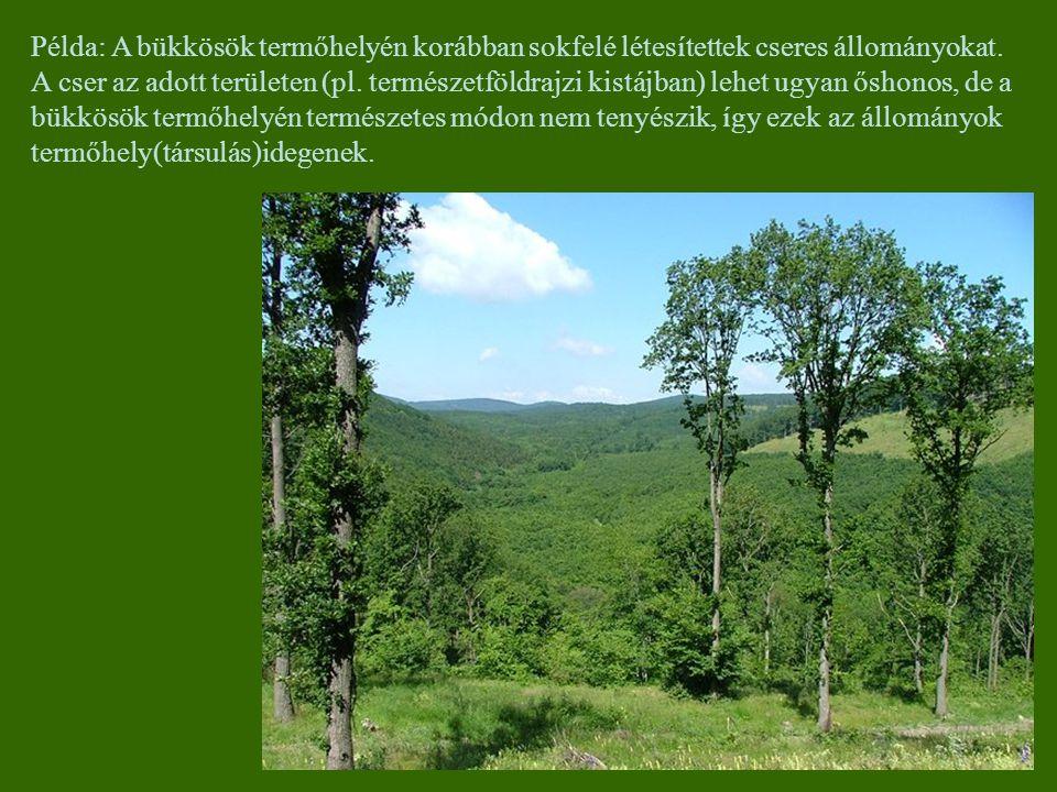 Példa: A bükkösök termőhelyén korábban sokfelé létesítettek cseres állományokat. A cser az adott területen (pl. természetföldrajzi kistájban) lehet ug