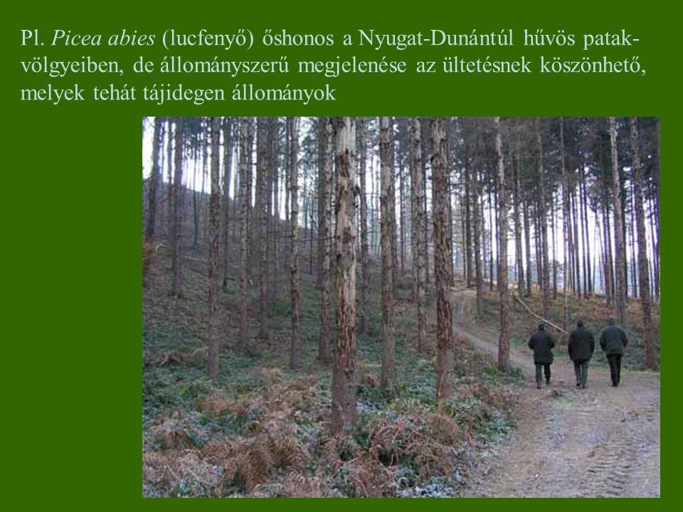 Pl. Picea abies (lucfenyő) őshonos a Nyugat-Dunántúl hűvös patak- völgyeiben, de állományszerű megjelenése az ültetésnek köszönhető, melyek tehát táji
