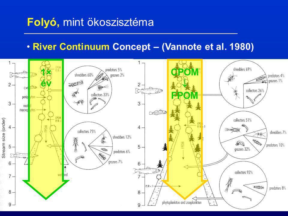 CPOM  FPOM 1× év Folyó, mint ökoszisztéma River Continuum Concept – (Vannote et al. 1980)