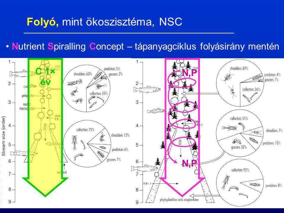 Nutrient Spiralling Concept – tápanyagciklus folyásirány mentén C 1× év N,P Folyó, mint ökoszisztéma, NSC