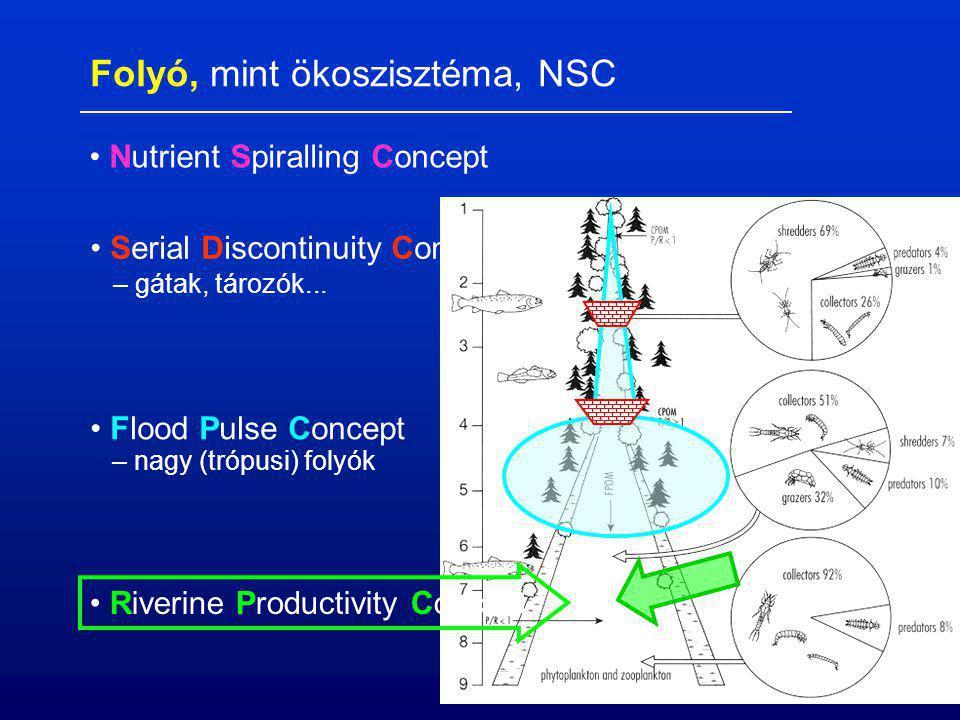 Nutrient Spiralling Concept Serial Discontinuity Concept Flood Pulse Concept – nagy (trópusi) folyók – gátak, tározók... Riverine Productivity Concept