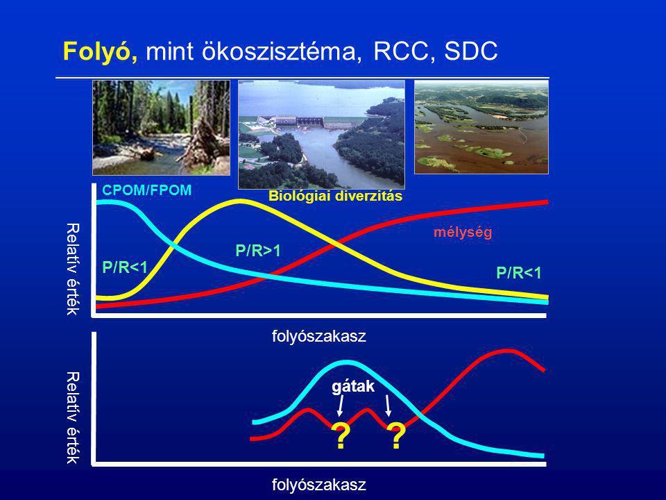 folyószakasz Relatív érték mélység Biológiai diverzitás CPOM/FPOM P/R<1 P/R>1 P/R<1 folyószakasz Relatív érték gátak ?? Folyó, mint ökoszisztéma, RCC,