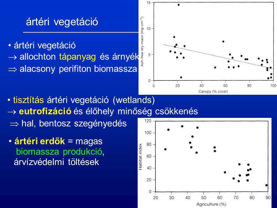ártéri vegetáció  allochton tápanyag és árnyékolás  alacsony perifiton biomassza tisztítás ártéri vegetáció (wetlands)  eutrofizáció és élőhely min