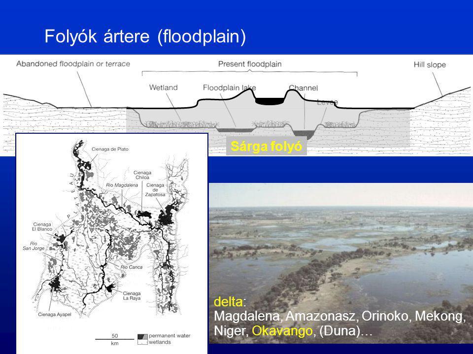 Folyók ártere (floodplain) Sárga folyó delta: Magdalena, Amazonasz, Orinoko, Mekong, Niger, Okavango, (Duna)…