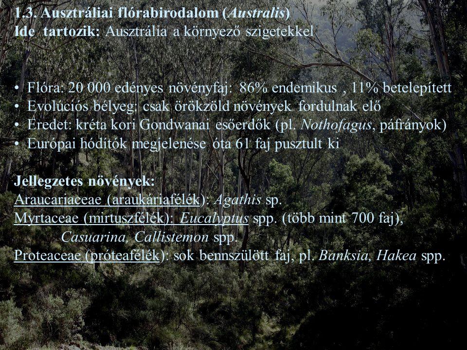 1.3. Ausztráliai flórabirodalom (Australis) Ide tartozik: Ausztrália a környező szigetekkel Flóra: 20 000 edényes növényfaj: 86% endemikus, 11% betele