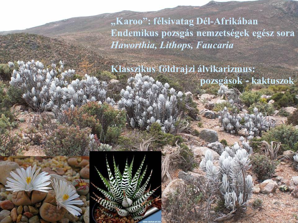 """""""Karoo"""": félsivatag Dél-Afrikában Endemikus pozsgás nemzetségek egész sora Haworthia, Lithops, Faucaria Klasszikus földrajzi álvikarizmus: pozsgások -"""