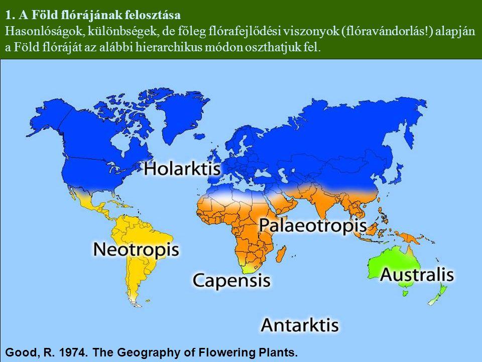 1. A Föld flórájának felosztása Hasonlóságok, különbségek, de főleg flórafejlődési viszonyok (flóravándorlás!) alapján a Föld flóráját az alábbi hiera
