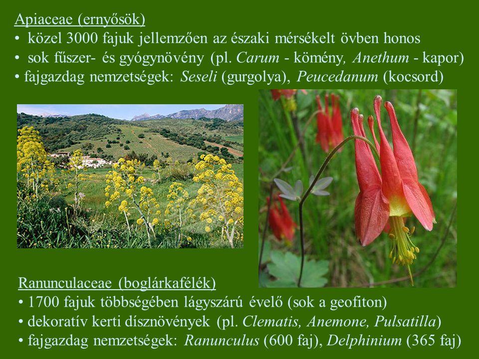 Apiaceae (ernyősök) közel 3000 fajuk jellemzően az északi mérsékelt övben honos sok fűszer- és gyógynövény (pl. Carum - kömény, Anethum - kapor) fajga